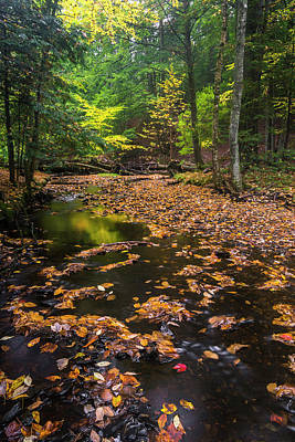 Photograph - Maine New England Fall Foliage In Autumn by Ranjay Mitra