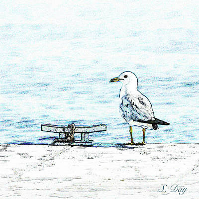 Mixed Media - Maine Seagull by Sandra Day