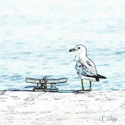 Maine Seagull Art Print