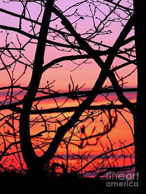Photograph - Maine Spring Sunset by Expressionistart studio Priscilla Batzell