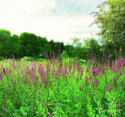 Photograph - Maine Wildflowers by Lisa Gilliam