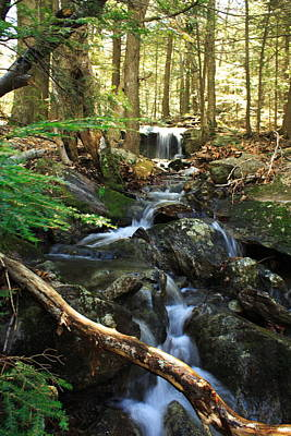 Maine Woods Spring Original by Doug Mills