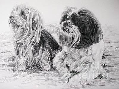 Yorkie Drawing - Maisey And Ollie by Keran Sunaski Gilmore
