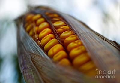 Mais Photograph - Maize by Giovanni Malfitano
