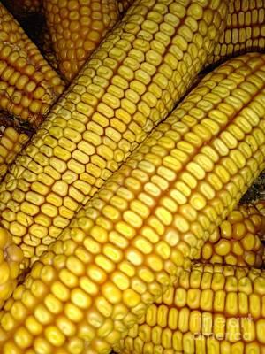 Photograph - Maize Or Corn by Erika H