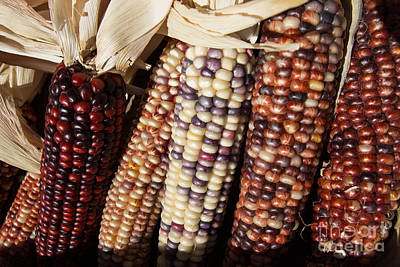 Photograph - Maize by Suzanne Luft