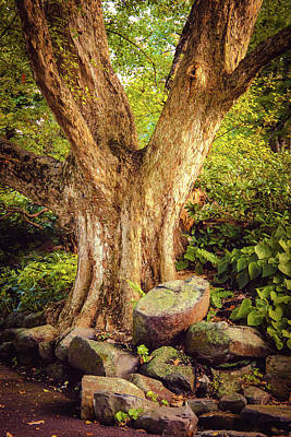 Photograph - Majestic And Magnificent Oak by Patrice Zinck