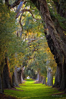 Photograph - Majestic Ave Of Oaks St Simons Island Ga Tree Art by Reid Callaway