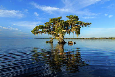 Photograph - Majestic Bald Cypress by Stefan Mazzola