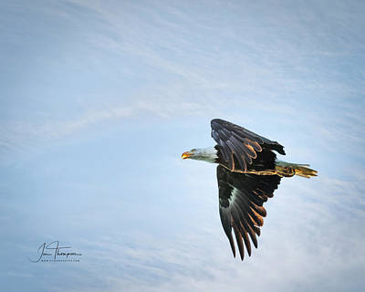 Photograph - Majestic Bald Eagle by Jim Thompson