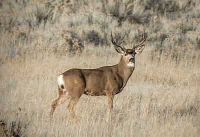Photograph - Majestic Buck by Loree Johnson