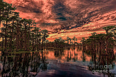 Photograph - Majestic Cypress Paradise Sunset by Bill And Deb Hayes