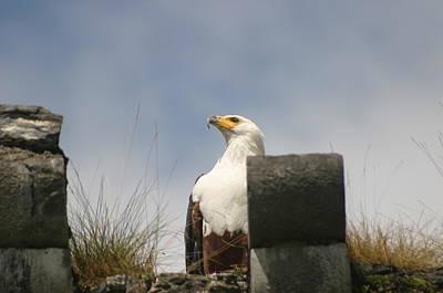 Castle Rock Photograph - Majestic Eagle by Dagmar Batyahav