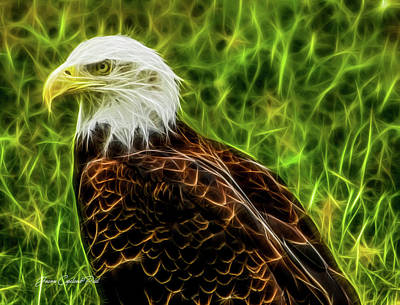 Photograph - Majestic Eagle by Joann Copeland-Paul