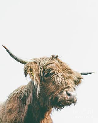 Photograph - Majestic Highland Cow Portrait by Patrik Lovrin