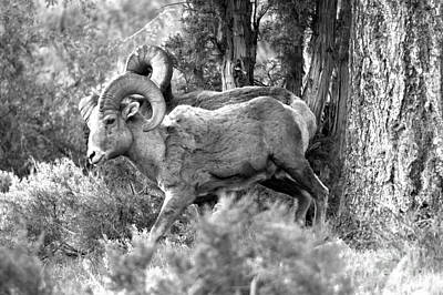 Photograph - Majestic In The Cliffs Of Lamar Valley Black And White by Adam Jewell