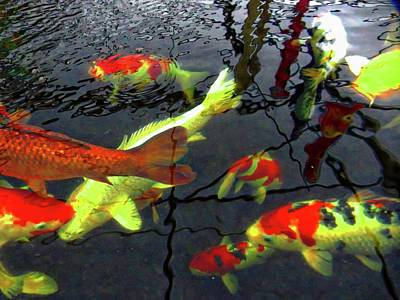Photograph - Majestic Koi Carp by Dorothy Berry-Lound