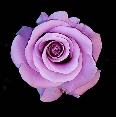 Photograph - Majestic Lavender by Jay Milo