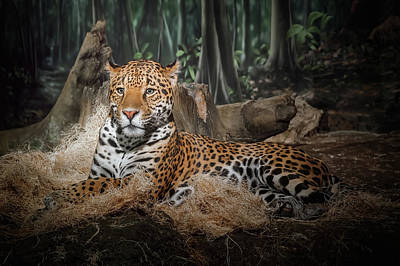 Rowing Royalty Free Images - Majestic Leopard Royalty-Free Image by Scott Norris