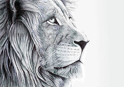 Creativity Drawing - Majestic Lion by Jack Burdess
