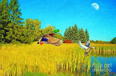 Mallard Wall Art - Photograph - Majestic Mallards by Laura D Young