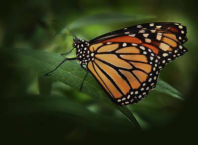 Majestic Monarch Art Print by Marie Leslie