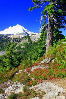 Photograph - Majestic Mount Baker by Frank Townsley
