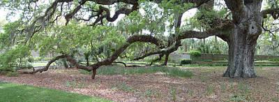 Photograph - Majestic Oak by Bill Barber