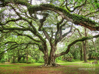 Photograph - Majestic Oak by Myrna Bradshaw