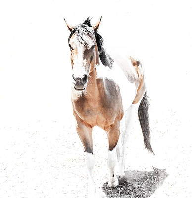 Photograph - Majestic Painted Horse by Jerry Cowart