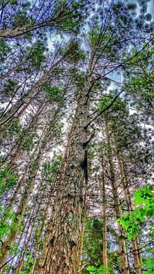 Owls - Majestic Pines by Thomas Kiebzak