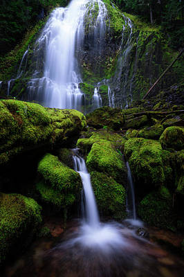 Photograph - Majestic Proxy by Bjorn Burton