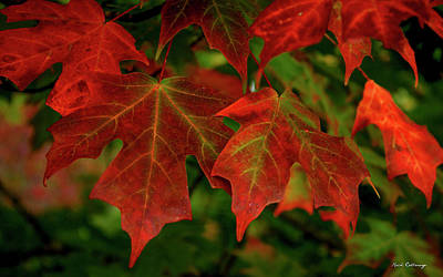 Of Autumn Photograph - Majestic Red Fall Maple Leaves Art by Reid Callaway