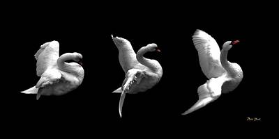 Dale Ford Digital Art - Majestic Swan Triptych by Dale   Ford