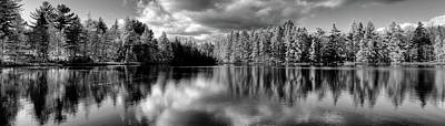 Photograph - Majestic Tamaracks by David Patterson