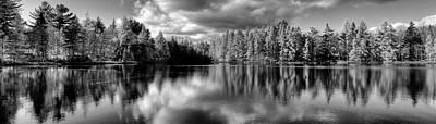 Photograph - Majestic Tamaracks by David Patterson