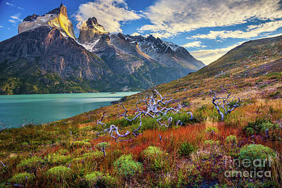 Fall Grass Photograph - Majestic Torres Del Paine by Inge Johnsson