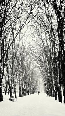 Photograph - Majestic Walk. Chernihiv, 2018. by Andriy Maykovskyi