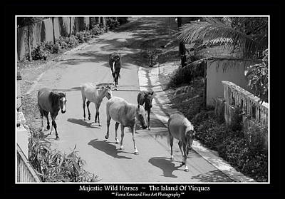 Photograph -  Majestic Wild Horses Of Vieques Poster by Fiona Kennard