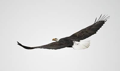 Photograph - Majestic Wings by Loree Johnson