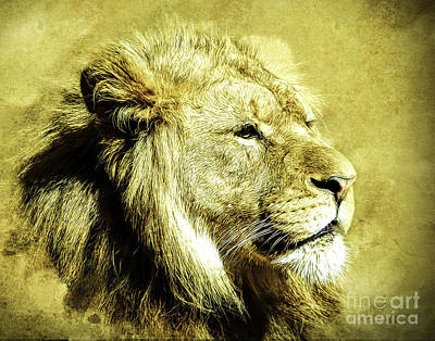 Photograph - Majesty  Two by Ken Frischkorn