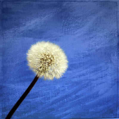 Photograph - Make A Wish 2 by Judy Vincent