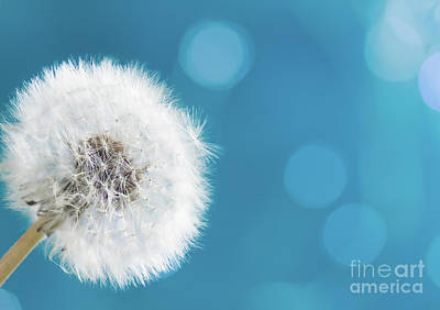 Photograph - Make A Wish  by Anastasy Yarmolovich