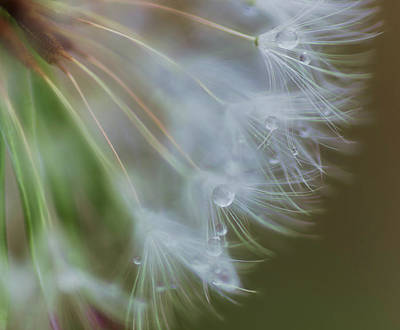 Photograph - Make A Wish by Beth Sawickie