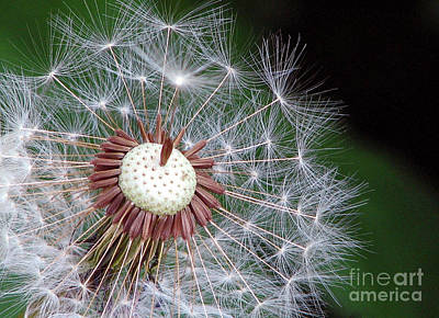 Photograph - Make A Wish by Chris Anderson