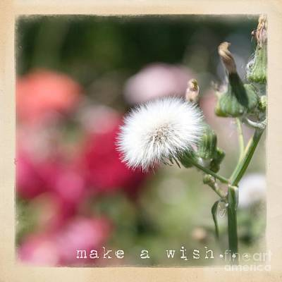 Photograph - Make A Wish... by Cindy Garber Iverson