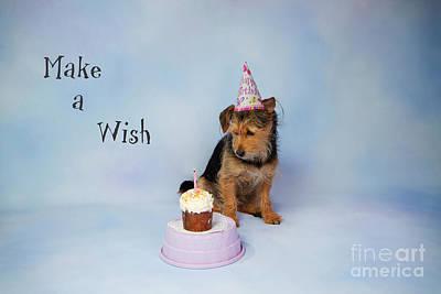 Photograph - Make A Wish by Denise Oldridge