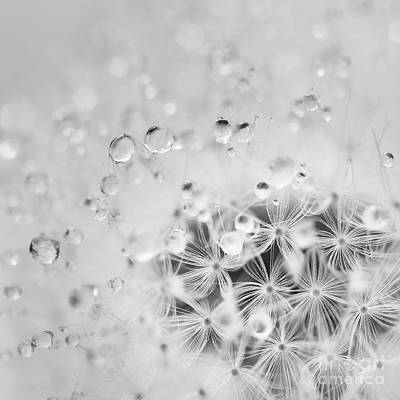 Flowers And Water Drops Wall Art - Photograph - Make A Wish For The Day by Masako Metz