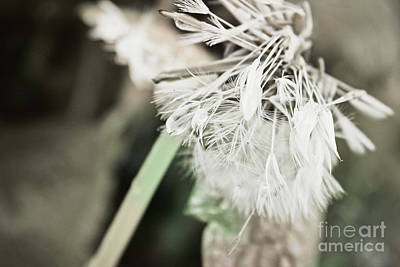Photograph - Make A Wish by Janie Johnson