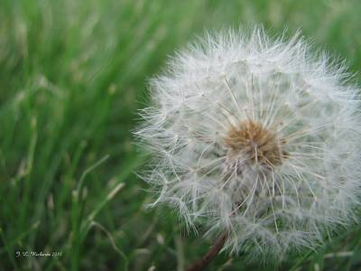 Photograph - Make A Wish by Jennie  Richards